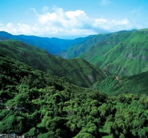 Floresta de Laurissílva da Madeira
